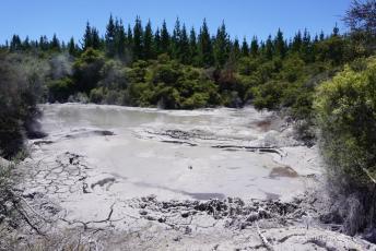 Kochende Schlammgeysire nahe Rotorua auf der Nordinsel