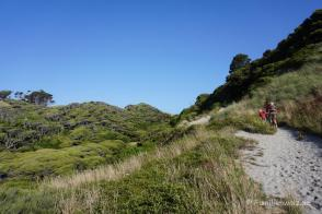 Auf dem Weg zum Wharariki Beach/ Südinsel