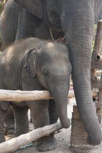 Elefanten, Strand und wilde Affen - Im Elefantendorf Hua Hin
