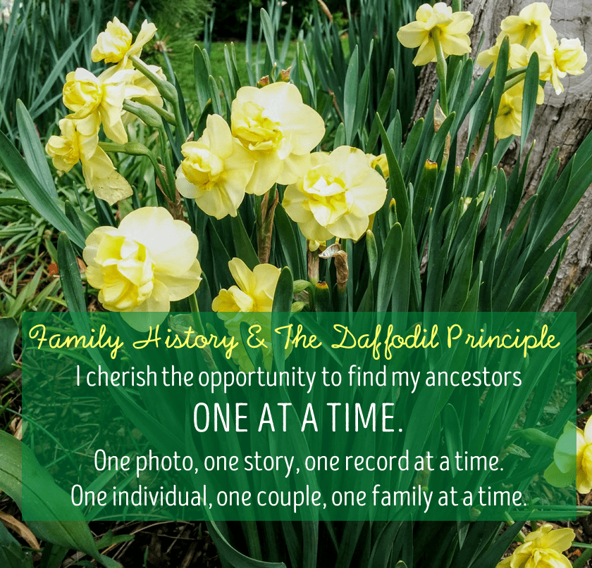Family History and the Daffodil Principle