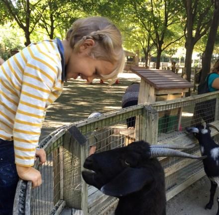 Petting zoo in Queens Zoo, Flushing Meadows Corona Park
