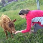 Feeding Bessie