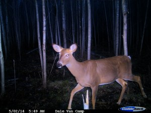 "A whitetail believes in the proverb ""Early Bird Gets the Worm"""