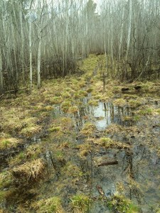 A deer trail under water.  This is a very wet spring thaw.