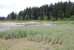 Belfair State Park, Washington