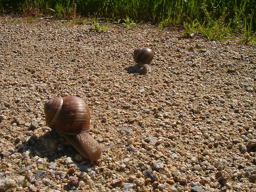 snail race II