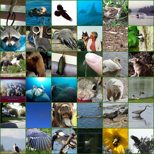 Animal Encounters Reader: Part 2 by yeimaya.