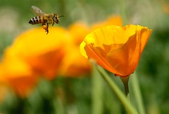 Bee Speed!!!