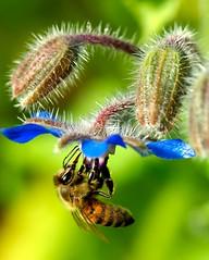 Bee la Green!