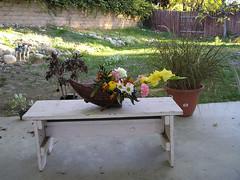 Cornucopia and Backyard