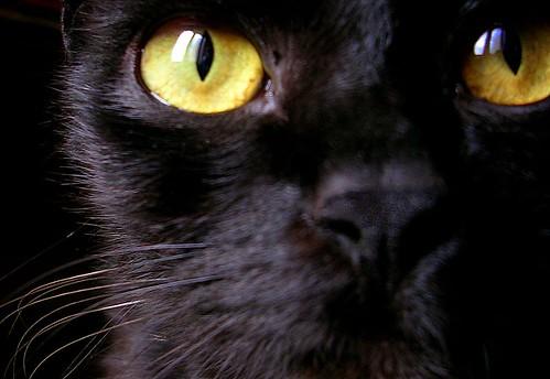 yellow gaze