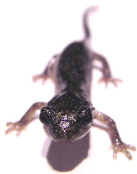 She turned me into a newt! by jurvetson.