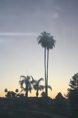 Morning palm