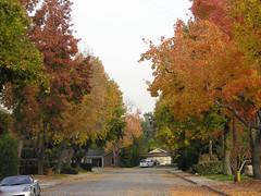 Dead End Autumn