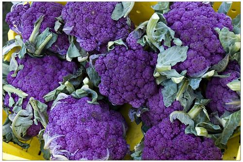 Purple Hayes