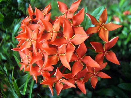 Flowers @ Bo Phut, Thailand