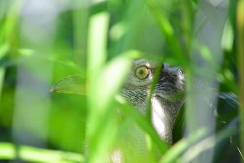 Secret Observer