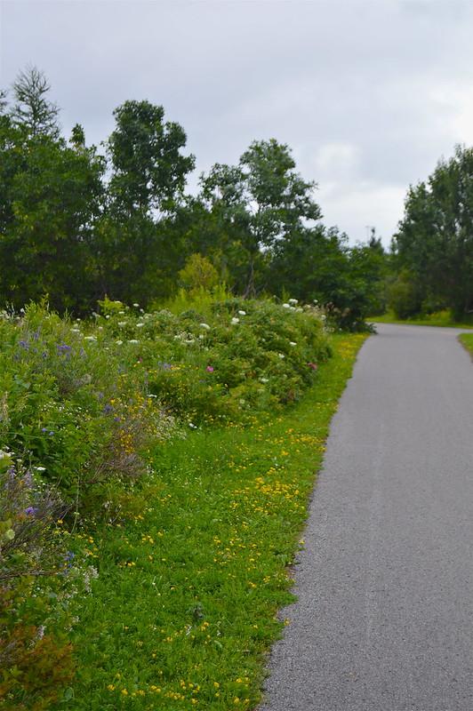 quebec_montmorencyfalls_bikepath_flowers