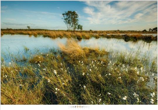 Veenpluis op de onduidelijke grens van water en land