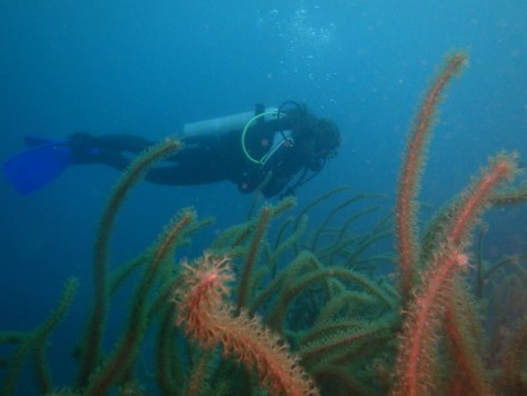 Scuba Diving in Tayrona National Park with Octopus Dive Center