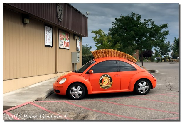 Shock Top Car