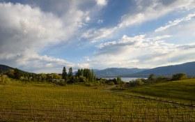 Quidni Estate Winery 65