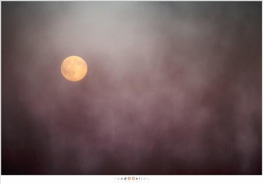 De Maan door het hoge gras heen gefotografeerd. Dit kan bijna alleen als de Maan laag aan de hemel staat. (400mm brandpunt)