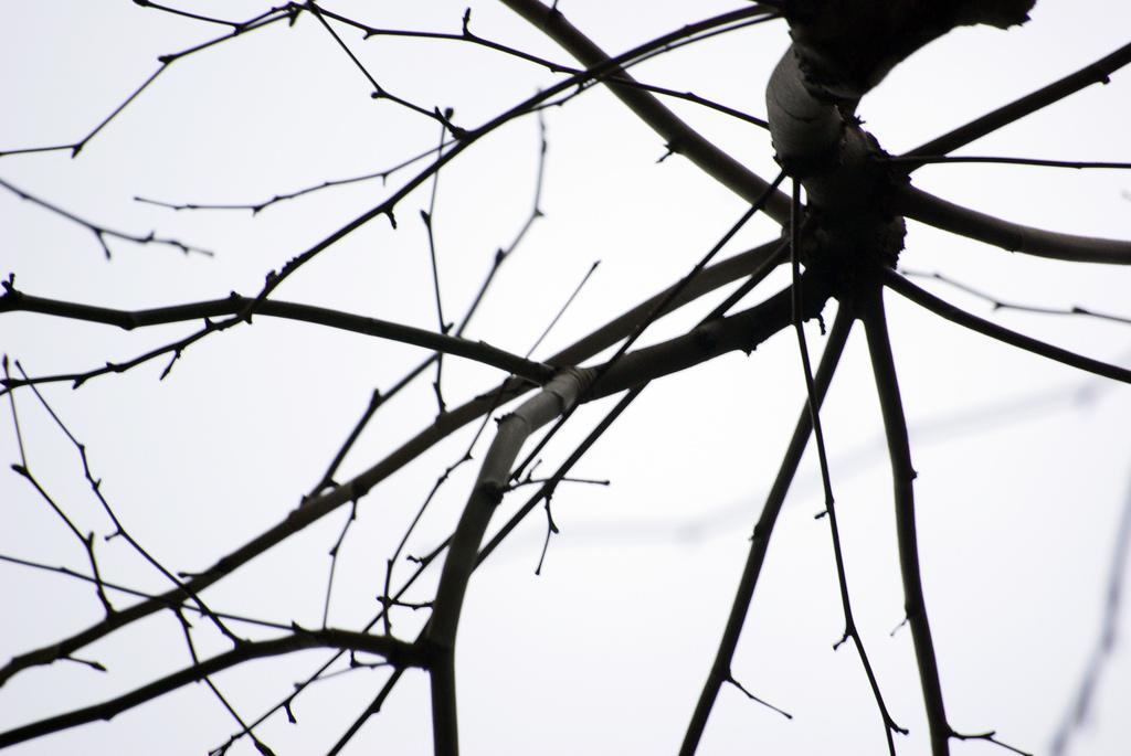 Imagen gratis de las ramas de un árbol