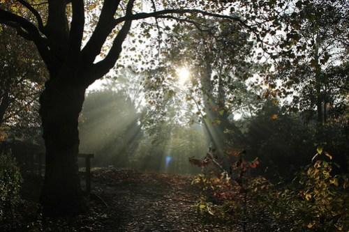 wa sun mist2