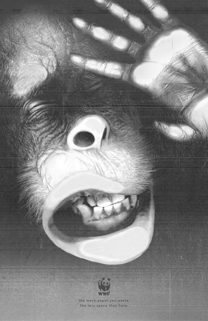 WWF - Orangutan
