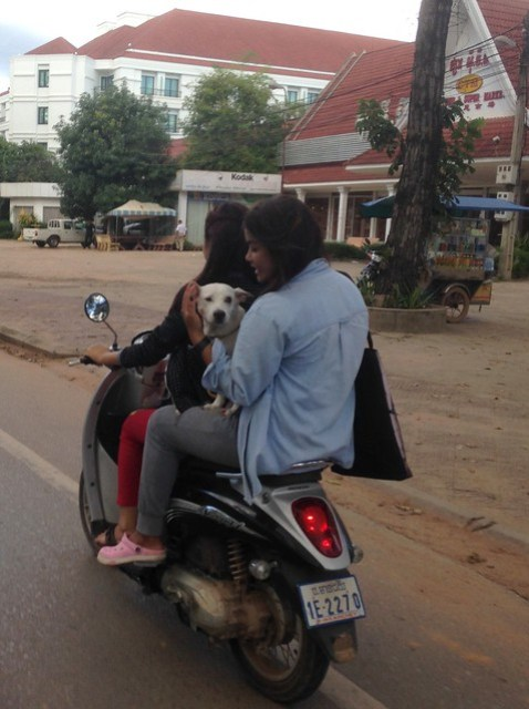 What Solo Female Travel is REALLY Like_A puppy on a motorbike