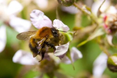 Bee'avin'
