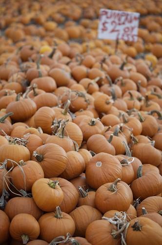 Piles o' pumpkins