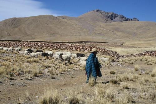 Female Shepherd