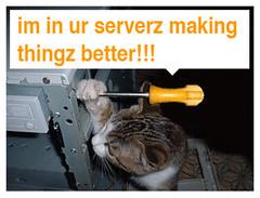 LOLCAT Twitter maintenance