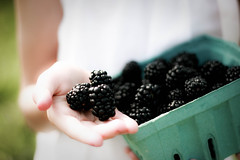 The only blackberries worth buying