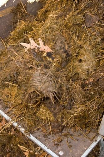 Humble Garden 2010: goat muck