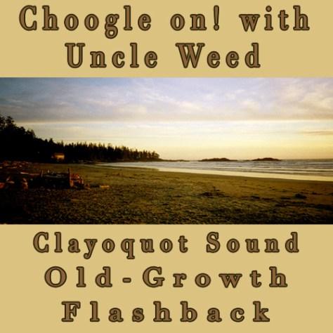 Clayoquot Sound Old-Growth Blockade - Choogle on