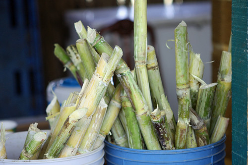 sugar cane for juice