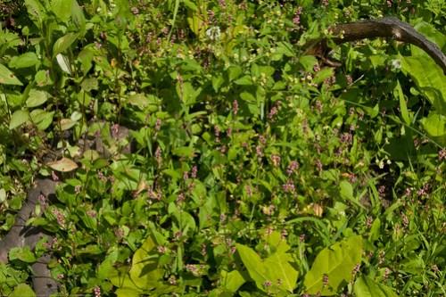 Humble Garden: weeds