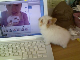 bunny baby pic