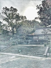 Fin des hanamizuki, début des tsutsuji