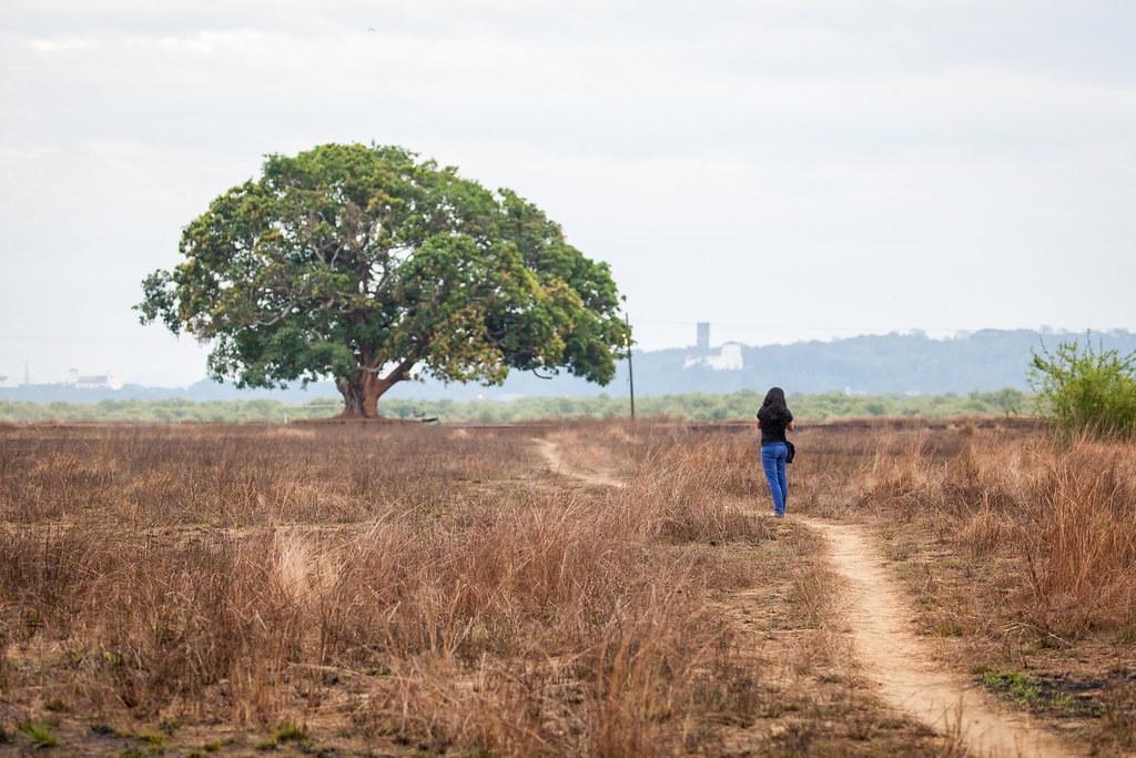 Priya takes a photo of the tree along the road at Divar