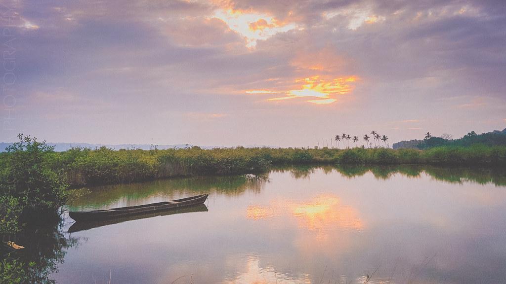 Divar's mangroves