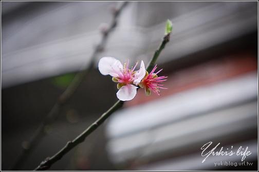 [玩]桃園 大溪老街 Yukis Life by yukiblog.tw