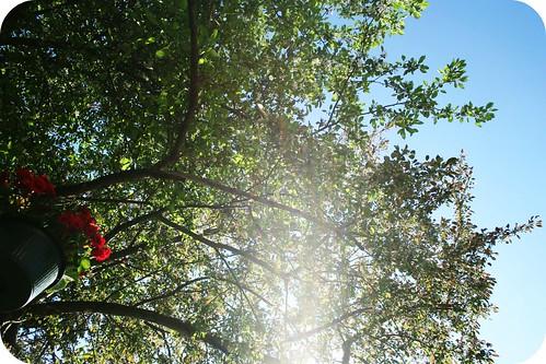 Under My Apple Tree