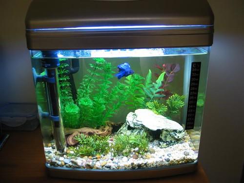 Betta Fish Tanks 60l Posted By Shil On Avforums Aqua