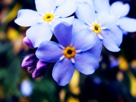 Forget-me whats?