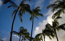 palms on Kauai's north shore