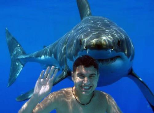 the teen, the shark by egarc2.